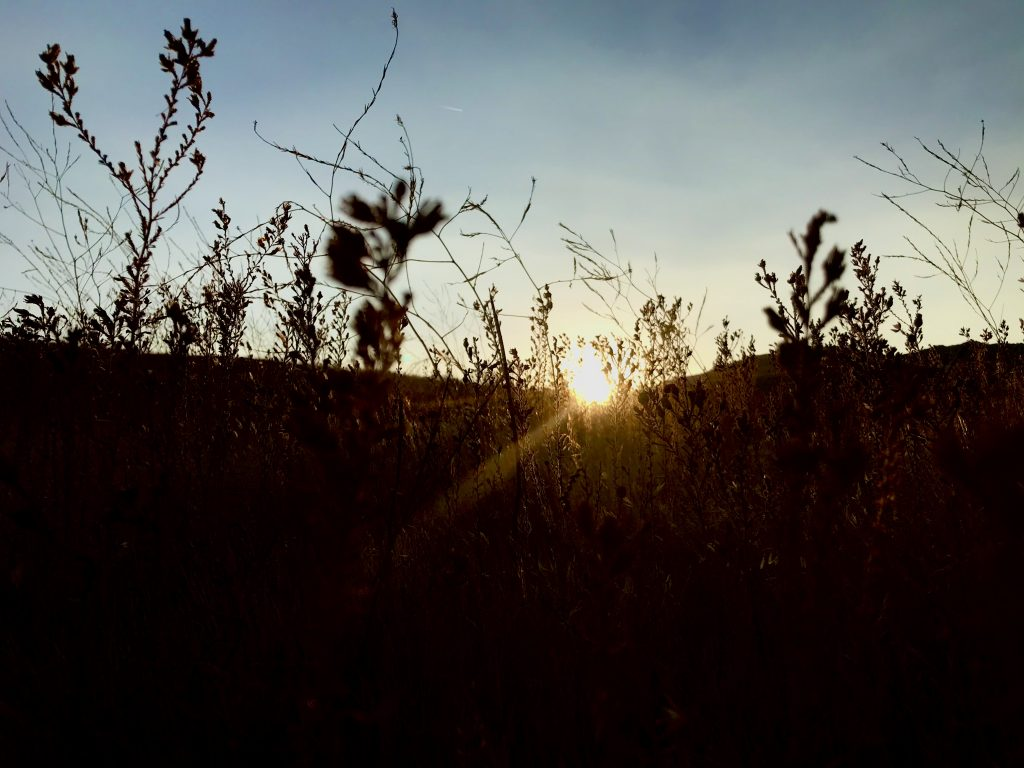 The last rays of a sunset come through the weeds in silhouette