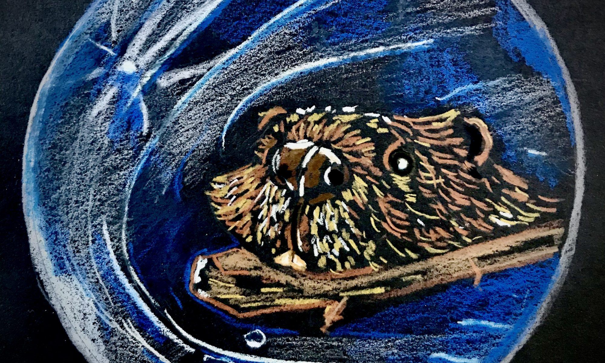 Drawing of the Beaver moon, a brown beaver swimming with a branch through a pond, but the pond is also the moon. Art by Anna Loscotoff, 2020